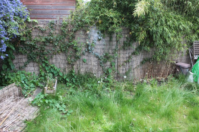 Right wall - before removing climbers and bamboo