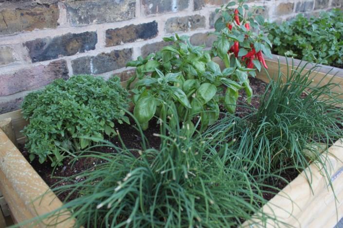 Maria Garden - Herbs pot
