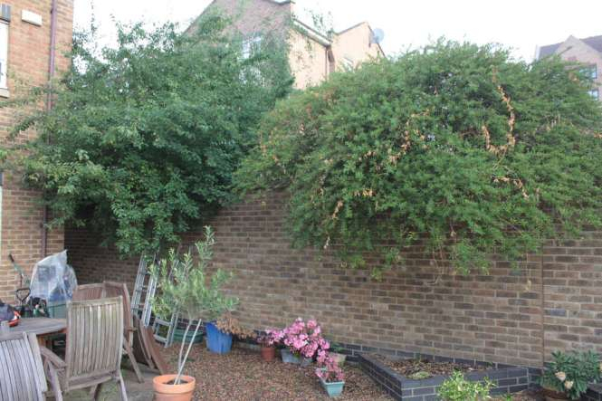 Tree crowns overshadowing  the garden